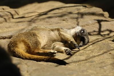 2007-06-15 Pittsburgh Zoo