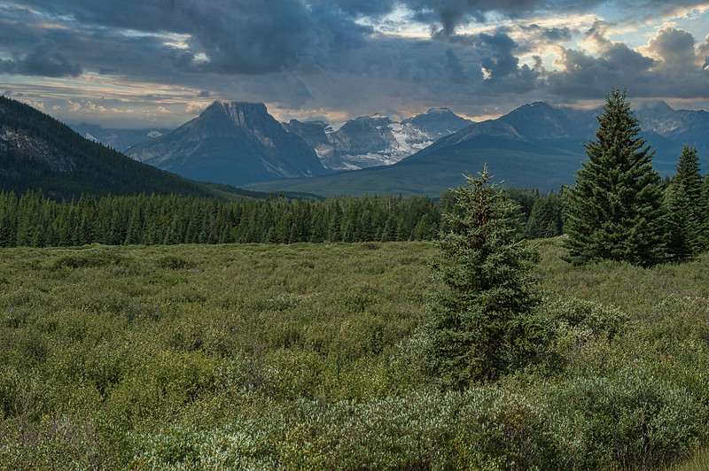 Along Bow Valley Parkway
