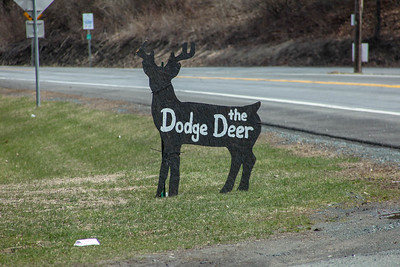 Dodge the Deer 5K by Albany Running Exchange
