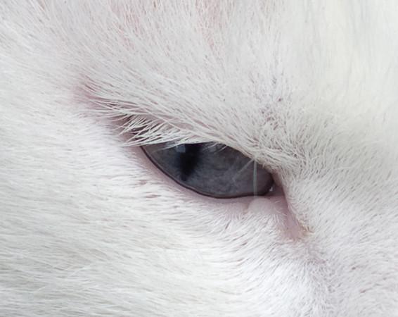 Detail Spotje