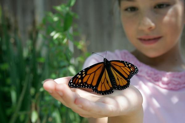 2012-05-29 Monarch Butterfly