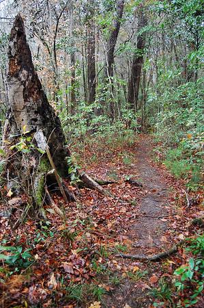 East Fern Trail - Bog Loop Anticlockwise
