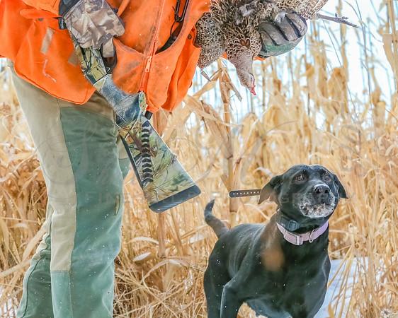 MN State Pheasant 1-2018