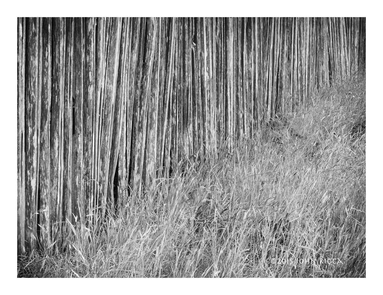 Fence & Grass.jpg