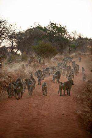 Tanzania Safari - Day 4