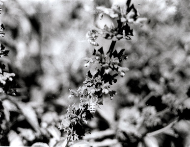 Film Roll #1 Principles Of Composition