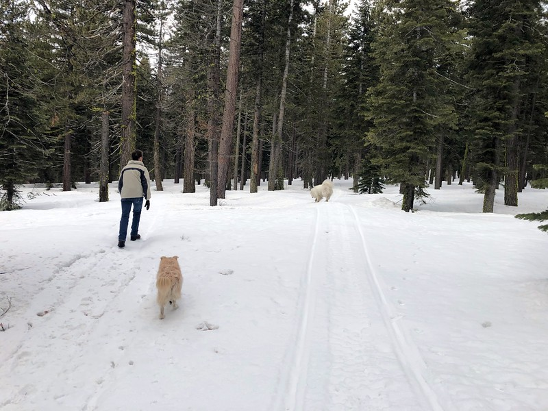 2019-03-21-0021-Trip to Tahoe with Dogs-Lake Tahoe-Curtis-Teddy the Dog-Leo the Dog.JPG