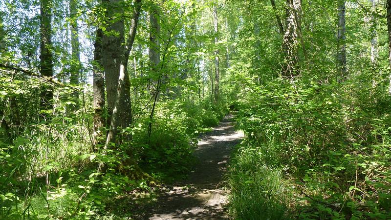 The dirt trail