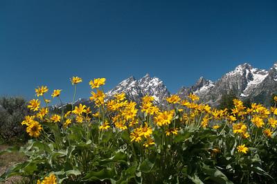 Grand Teton National Park - 2011