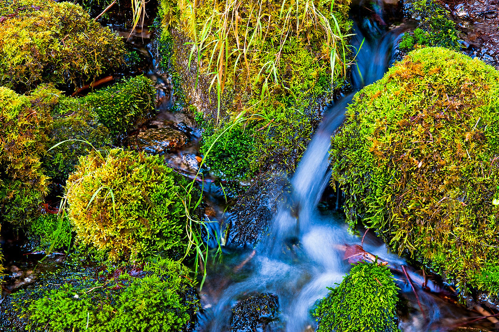 Merced River Moss, Yosemite