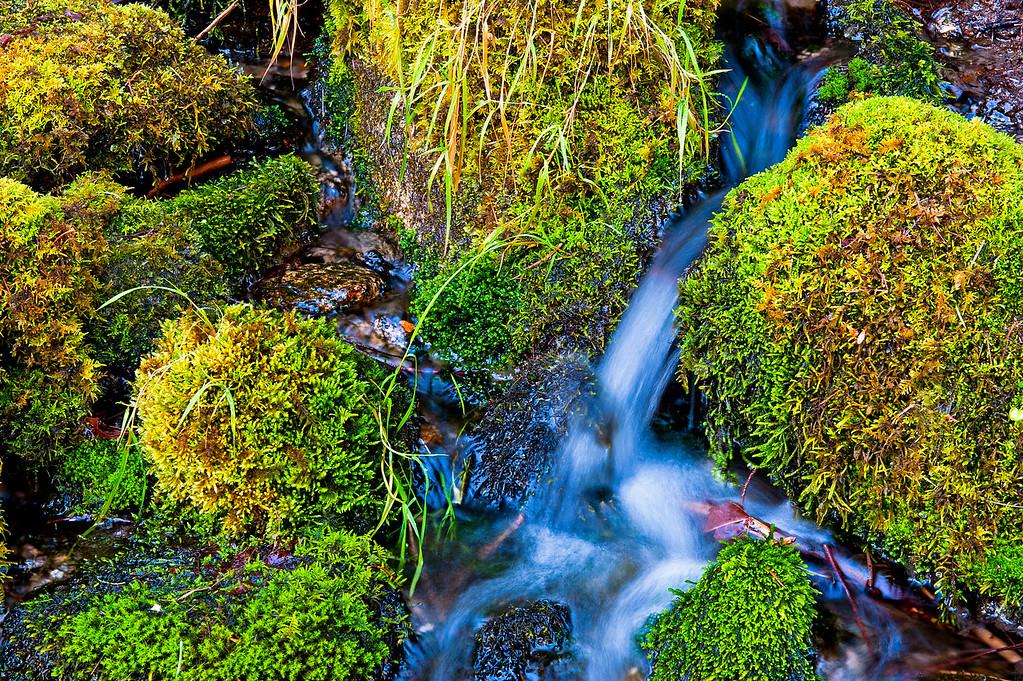 Merced River Moss, Yosemite