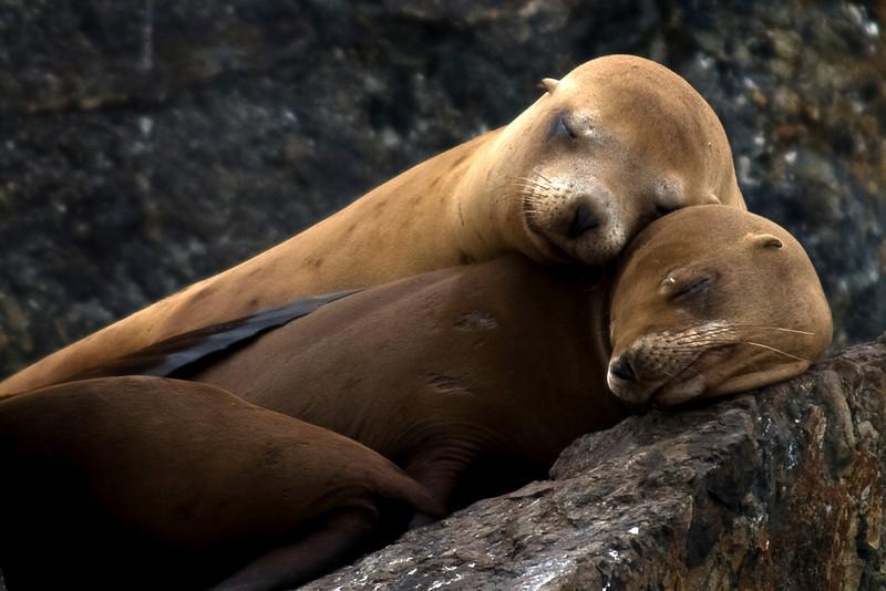 Sleeping Seals4282.jpg