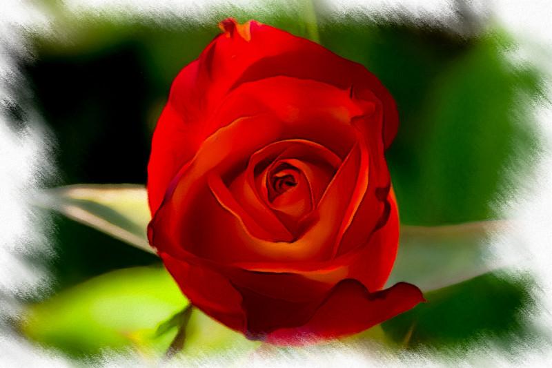 June 14 - Rose.jpg