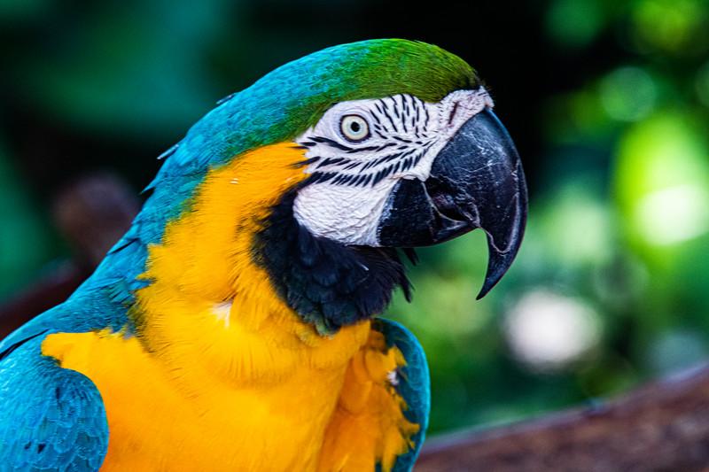 Naples Zoo - August 17, 2019