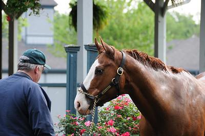 Kentucky Horse Park 2012