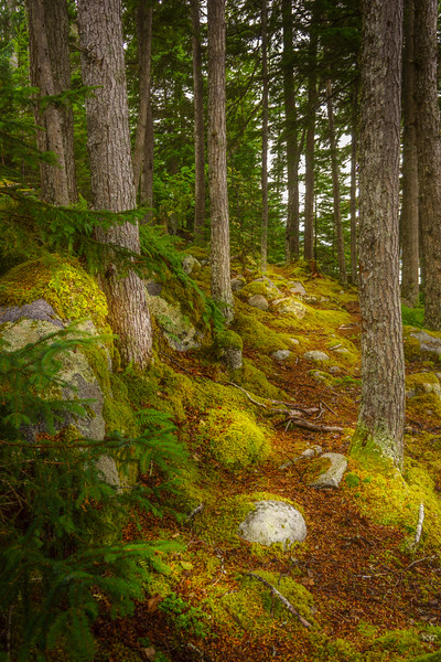 Wooded Glade 1