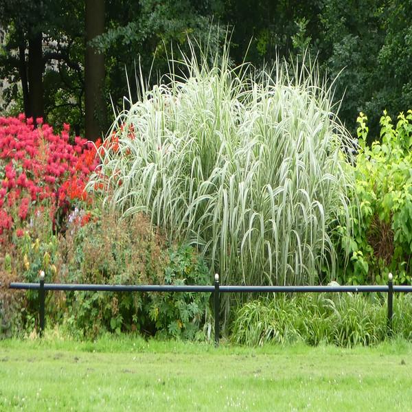 Wain Fawr Park~0149-1sq.