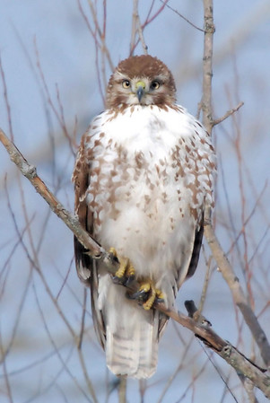 Hawks,owls,crows and eagles. Critter eating birds