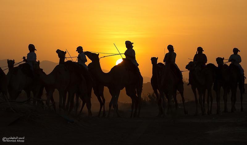 IMGL9276- Camel Race.jpg