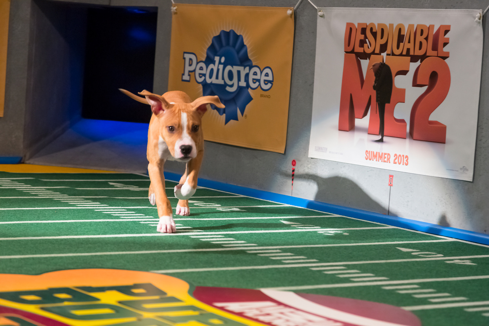 Description of . Dogs make their first enterance on the field during Puppy Bowl IX(Photo credit: Animal Planet)