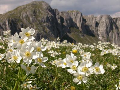 Austrian Alps II