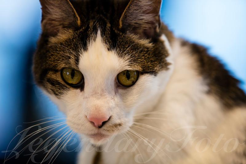 Cats_Bugatti_3.jpg