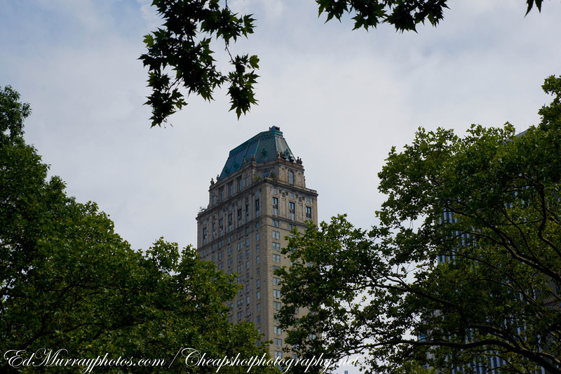 Building Tree: The Mercantile Building as seen from Central Park in New York City
