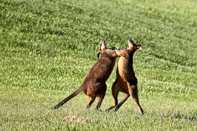 Australia 2017