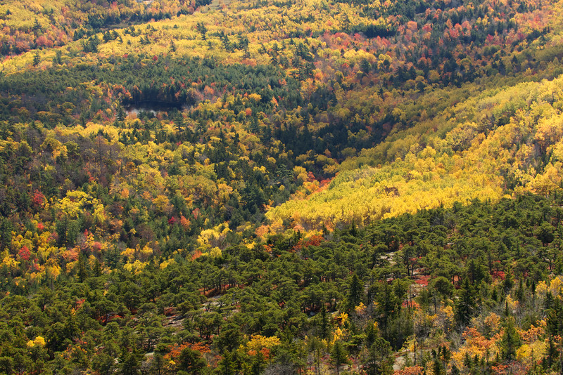 _J4A9336 Autum Tapestry from Cadillac Mt. Acadia National Park,Me..jpg