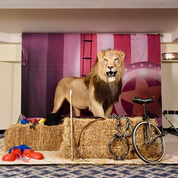 lion set up.jpg