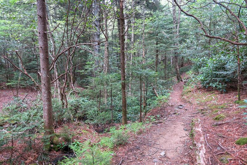 Mountains-to-Sea Trail -- 5,290'