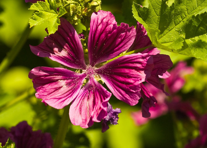 2009 06 30_NY Botanical Gardens_0662_edited-1.psd