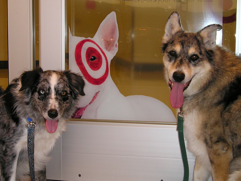 Tika and Boost, who helped me with my journey around the parking garage, found a friend in the doorway.