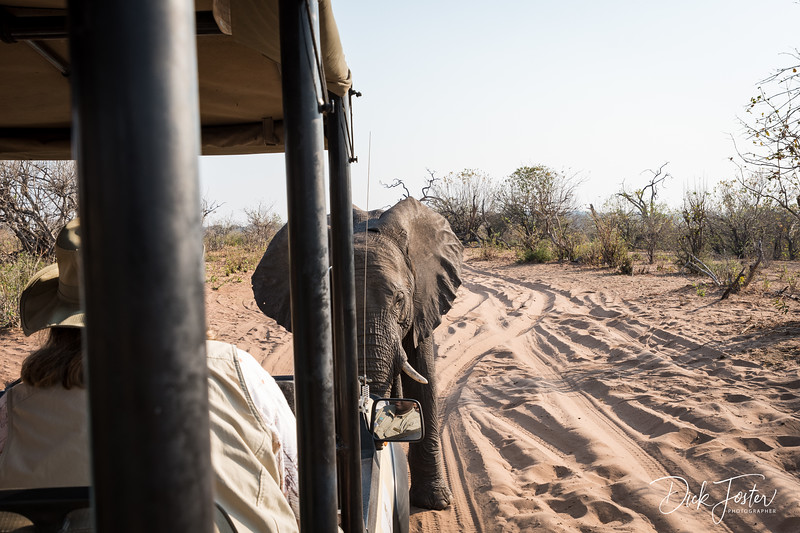 Elephant Checking Us Out