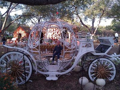 Arboretum November 2012