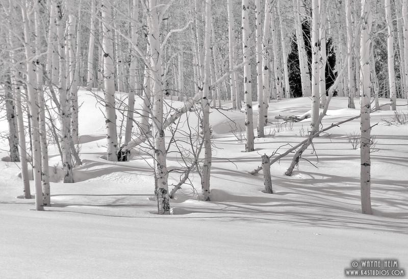 White Paint - Black & White Photography by Wayne Heim