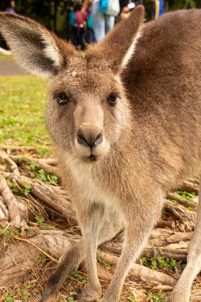 Australia_188.jpg