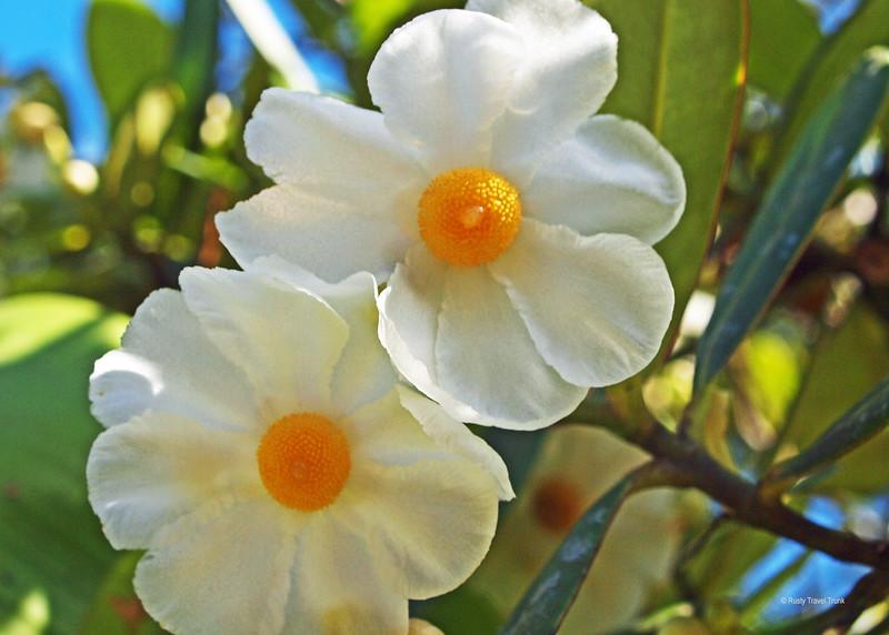Kaieteur National Park - flora (2).JPG