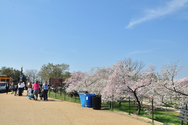 Cherry Blossoms 2014 014.jpg