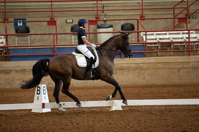 Horse 465