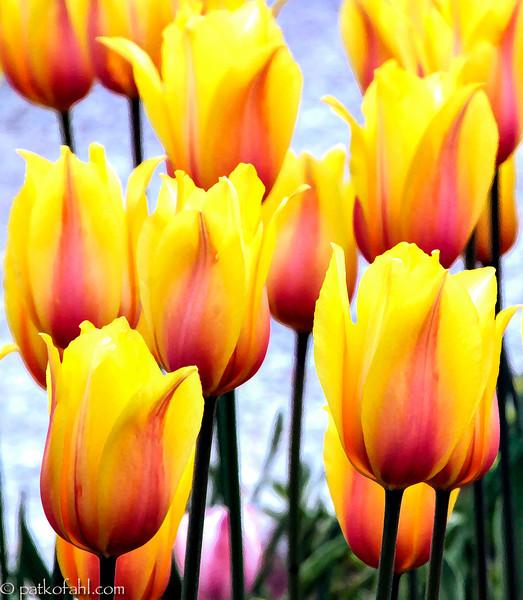 Monet's_Gift_1__MG_9757.jpg