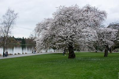 Spring at Green Lake
