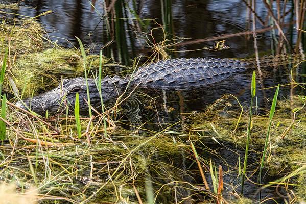 Florida,  Anna Maria Island