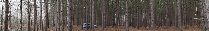 Scion XB in the woods