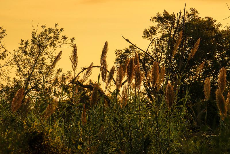 Sunrise in Schertz, TX