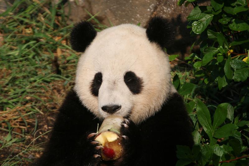 Panda072807_063.JPG
