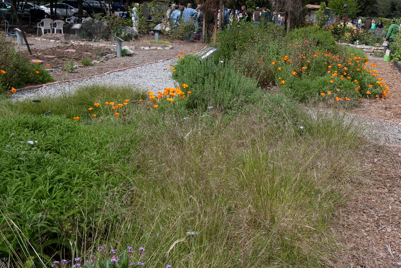 These are a variety of native plants in the Master Gardener demonstration garden