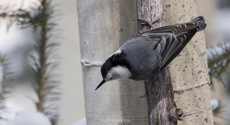Tell bird 7.jpg