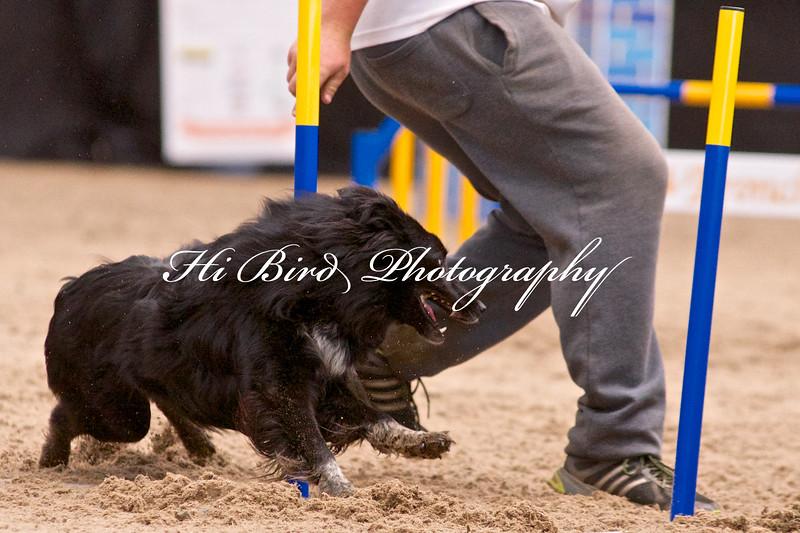Large dog jumping  1118.jpg