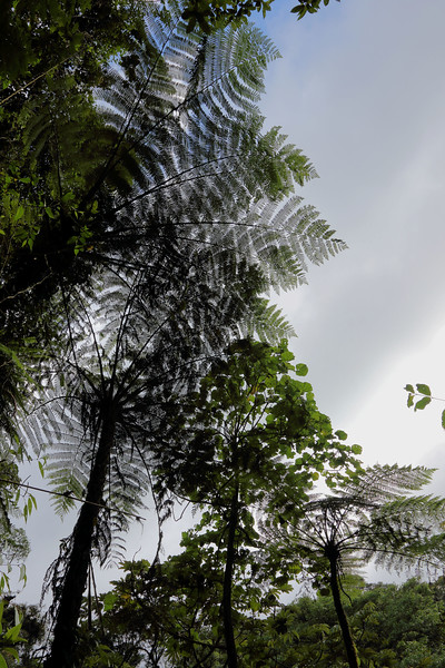 Fern Tree Overhead.jpg